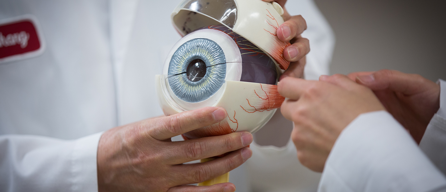 person holding a large model of an eye