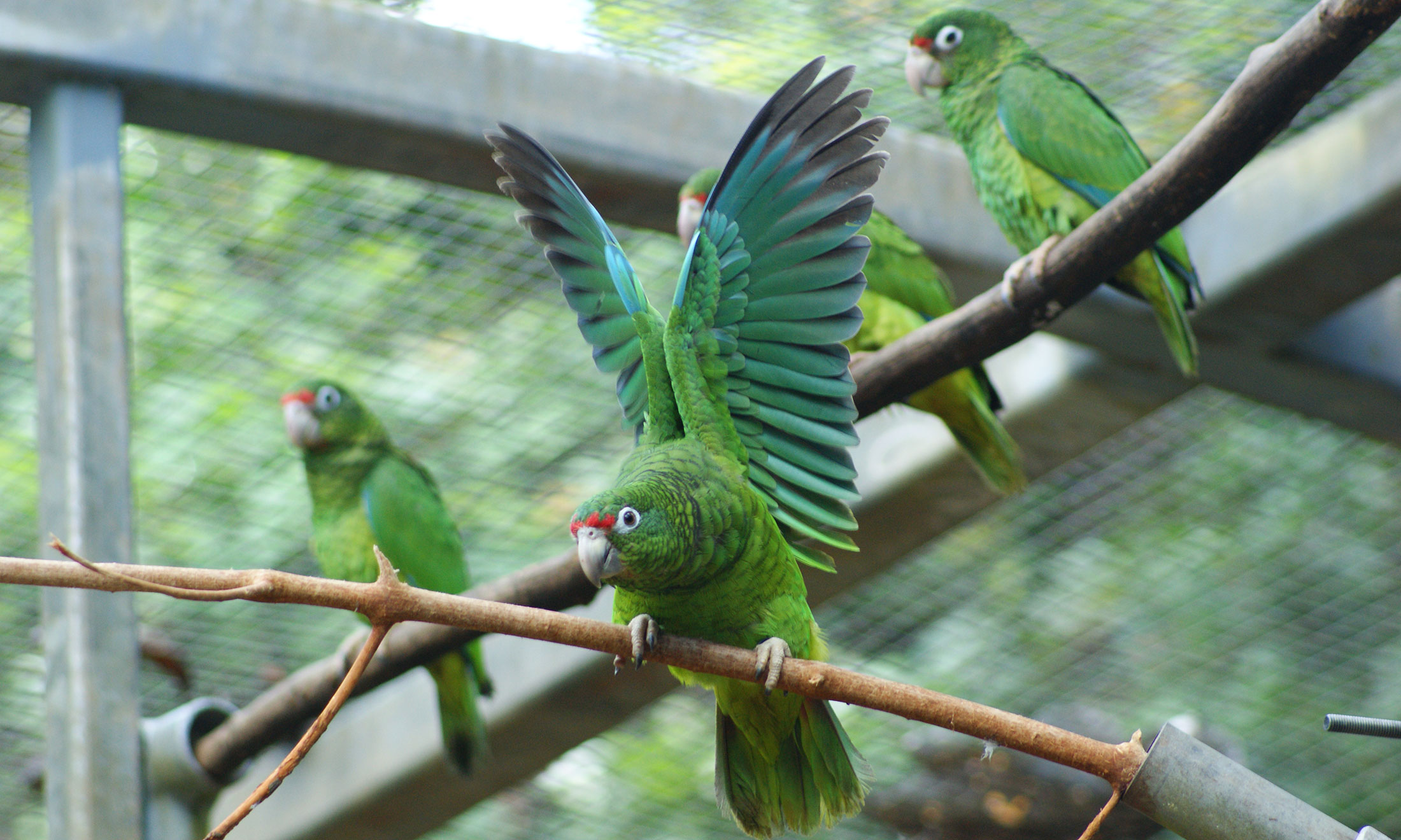 Oakland University Map >> Researchers use genome mapping to help save rare parrot ...