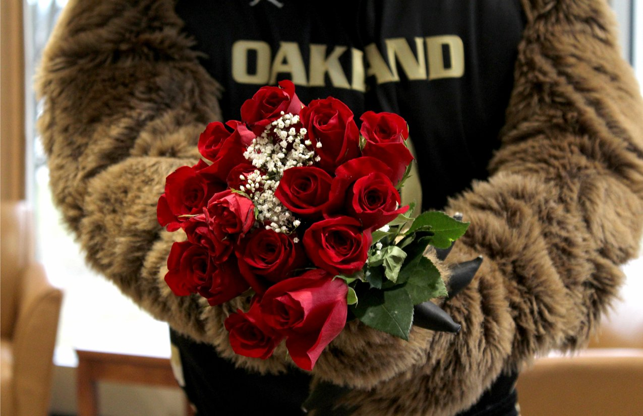 close up of Grizz's paws holding a rose bouquet